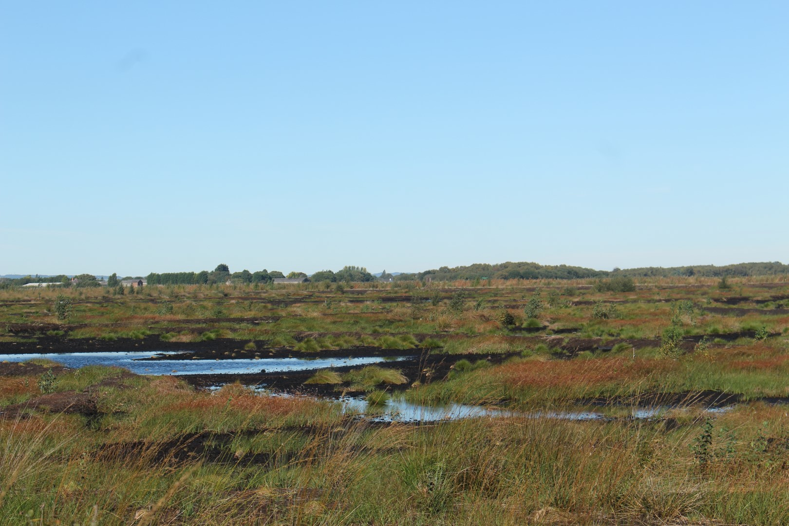 Little Woolden Moss